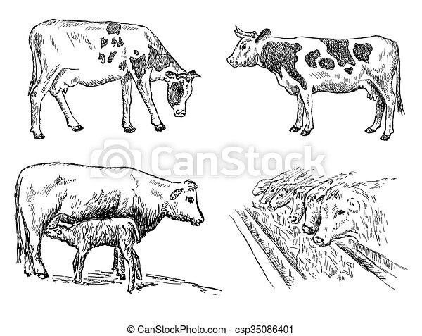 Un juego de vacas - csp35086401