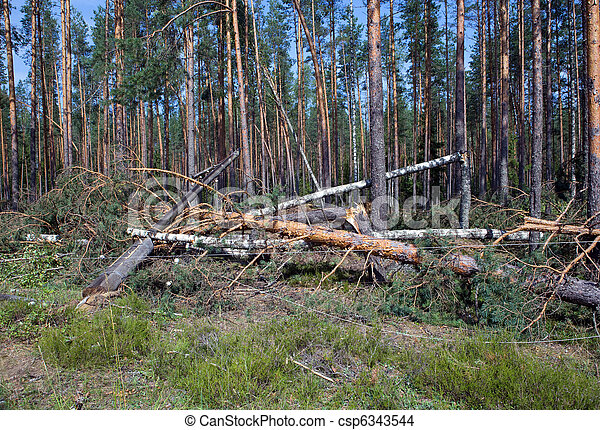 "Consequences of hurricane ""Asta"", Russia. The uprooted trees and the tumbled down support of lines electricity transmissions