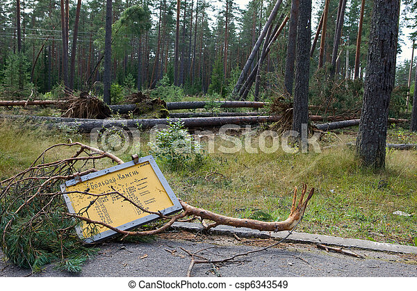 """Consequences of hurricane """"Asta"""", Russia. The broken sign on a bus stop against the broken trees - csp6343549"""