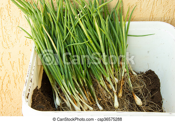 Container full of herbs for planting - csp36575288