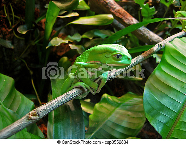 Contemplative Frog - csp0552834