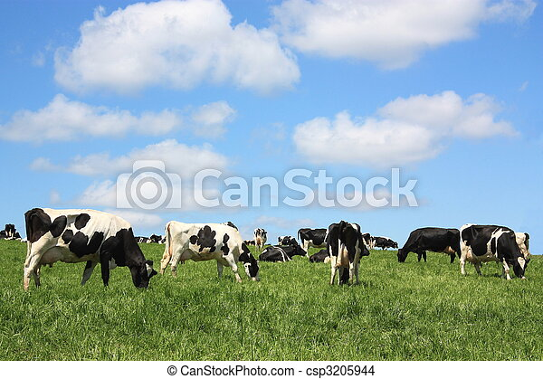 Contented dairy cows - csp3205944