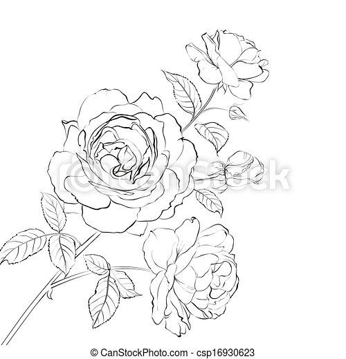 Contour of rose. - csp16930623