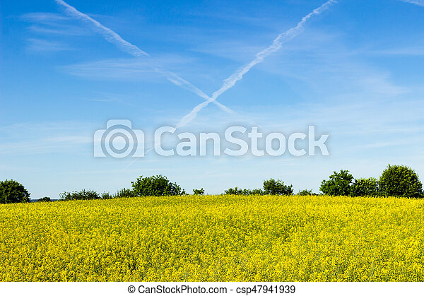 Contrails and rapeseed field - csp47941939