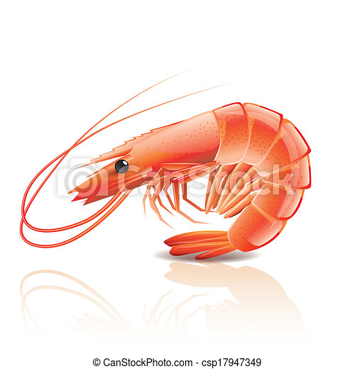 Cooked shrimp isolated on white - csp17947349