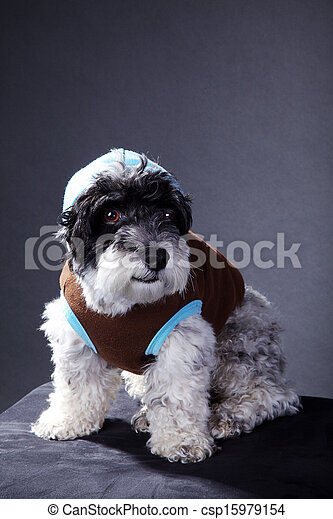 cool dog in studio - csp15979154