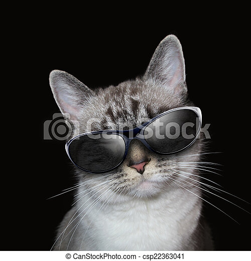 Cool White Cat With Party Sunglasses on Black - csp22363041