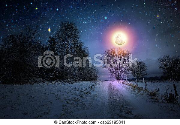 coperto, alberi inverno, neve, pieno, paesaggio, moon. - csp63195841