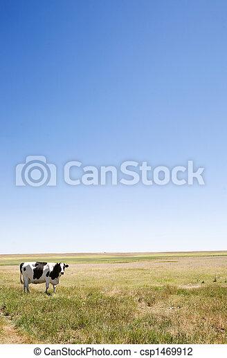copie, vache, espace - csp1469912