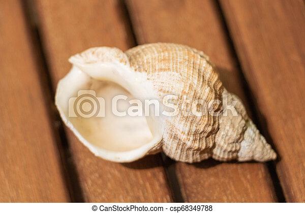coquille, closeup, escargot mer, ouverture - csp68349788