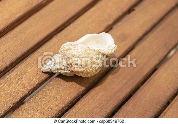coquille, fond, escargot, bois, spirale, mer - csp68349762