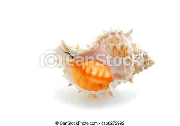 coquille, mer - csp0272992