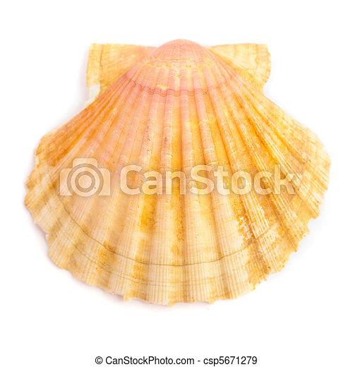 coquille, mer - csp5671279