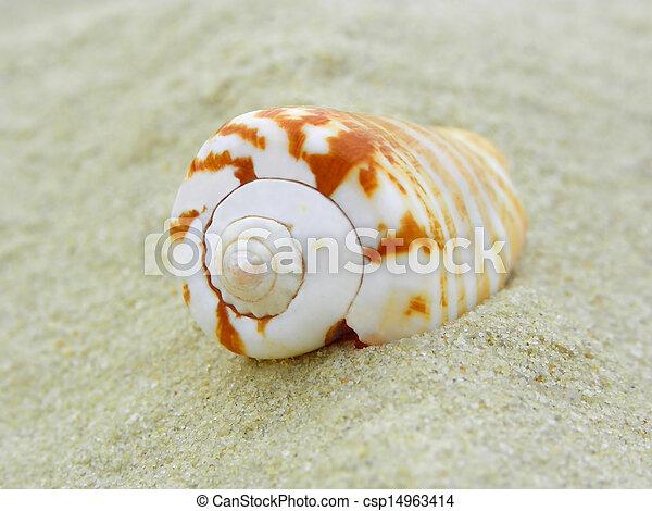 coquille, nautile - csp14963414