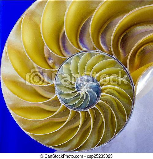 coquille, nautile - csp25233023