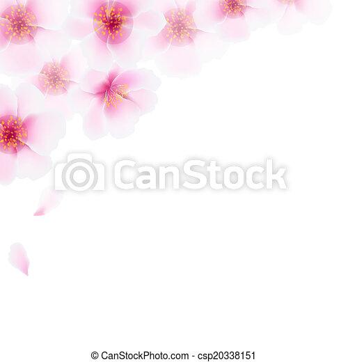 cor-de-rosa, cereja, flores, borda - csp20338151