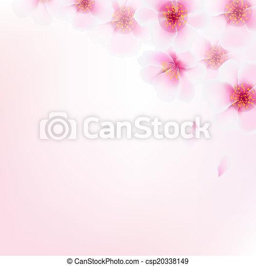 cor-de-rosa, cereja, flores - csp20338149