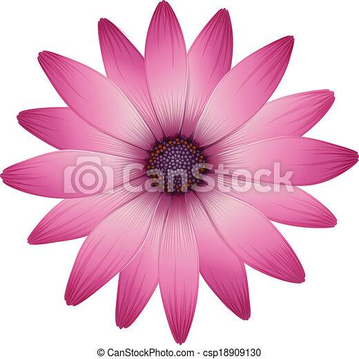 cor de rosa pétalas flor flor cor de rosa ilustração pétalas
