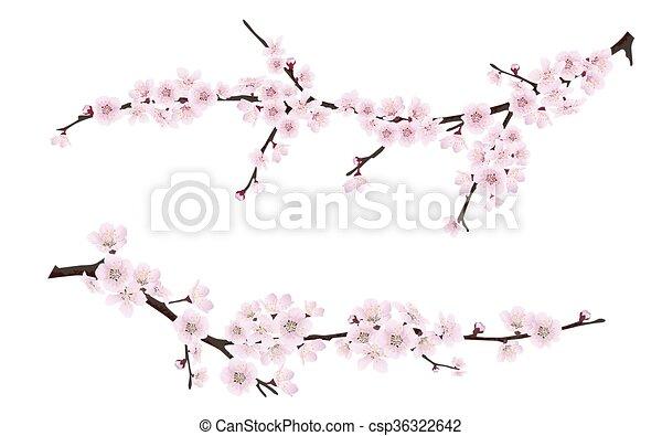 cor-de-rosa, ramos, primavera, árvore, florescer, flores - csp36322642