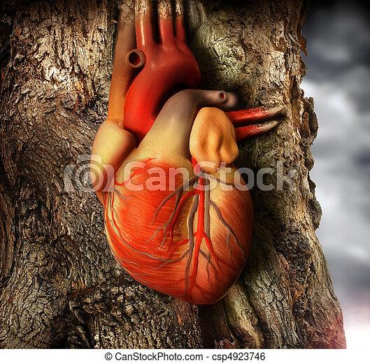 coração - csp4923746