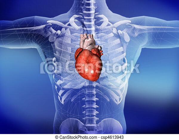 coração - csp4613943