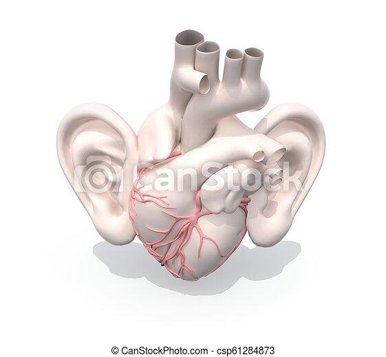 coração, orelhas, human, órgão, grande - csp61284873