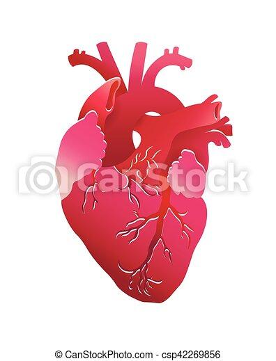 coração - csp42269856