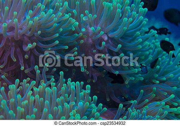 Anémona en un arrecife de coral - csp23534932