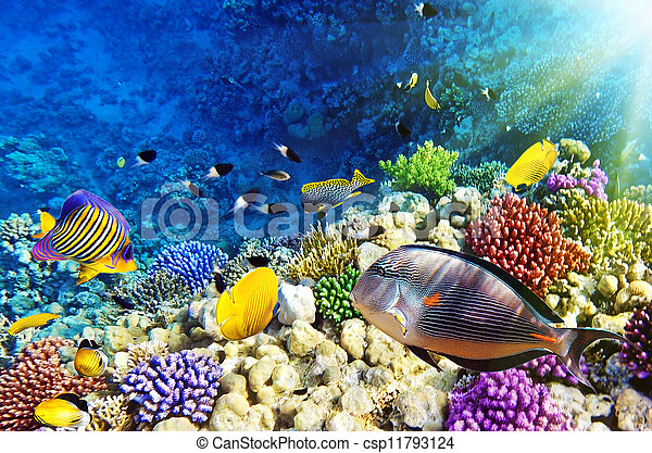 Coral and fish in the Red Sea. Egypt - csp11793124