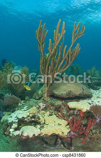 Sea Rod en un arrecife de coral - csp8431860