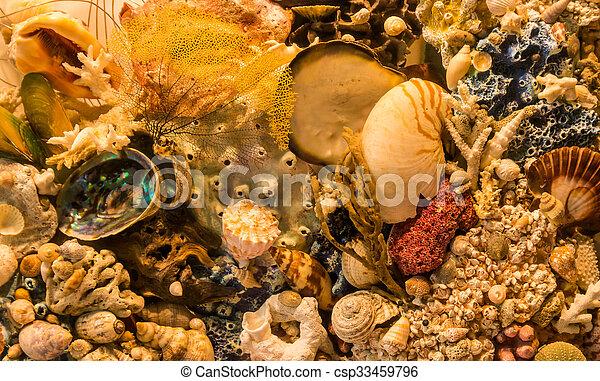 Concha de coral marino - csp33459796