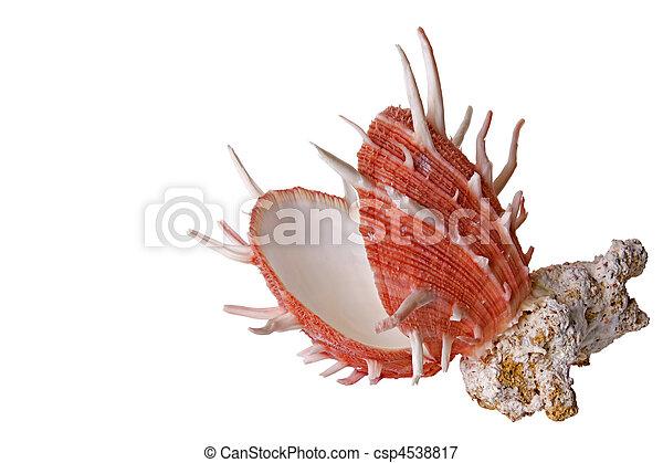 Concha marina y coral - csp4538817