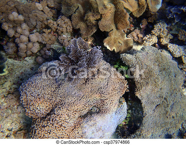 Un coral gorgonia colorido - csp37974866