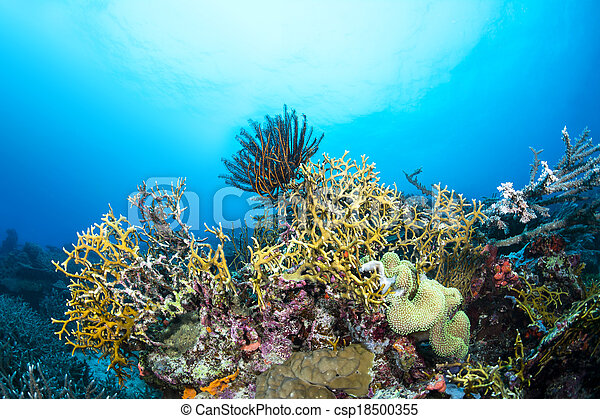 coral de fuego, arrecife - csp18500355