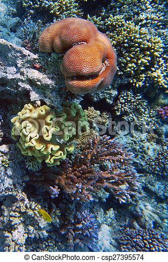 Escena de coral - csp27395574