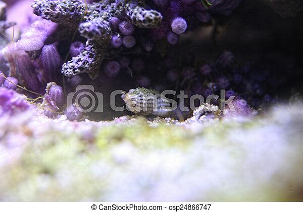 Coral - csp24866747
