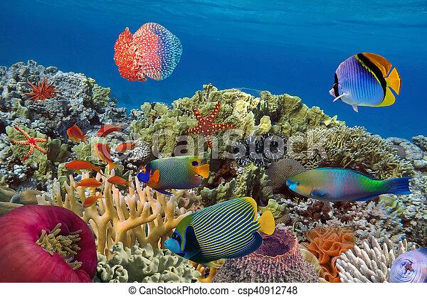 Coral garden with starfish - csp40912748