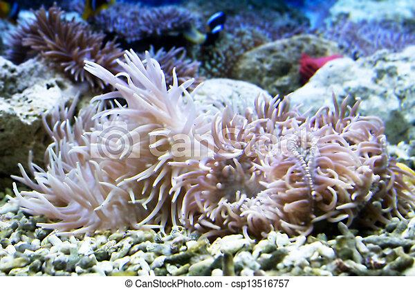 Hermoso coral - csp13516757