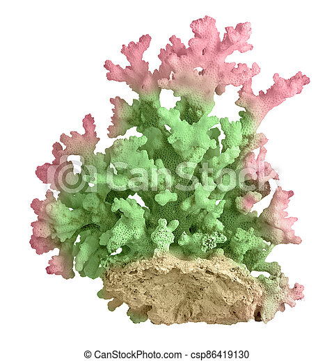 Coral isolated on white background - csp86419130