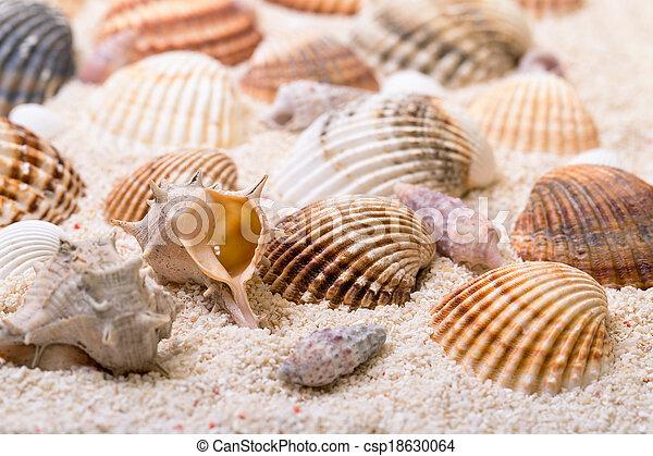 Coral Mar De La Arena Conchas Mar Coral Arena Plano De Fondo - Fotos-de-conchas-de-mar