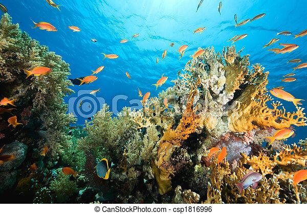 coral, océano, pez - csp1816996