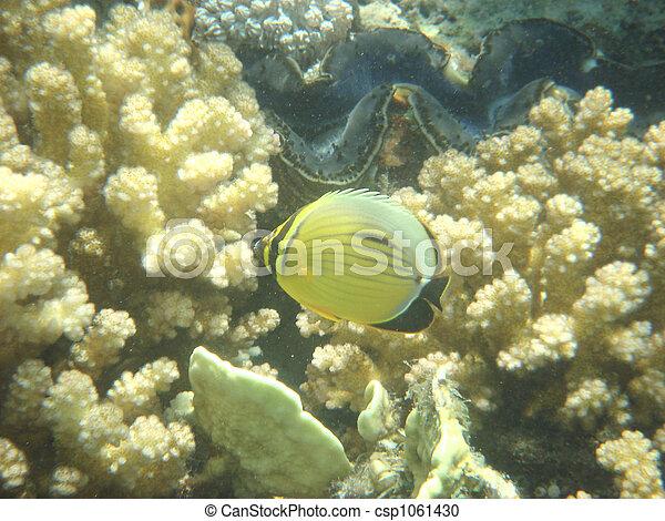 Pescado coral - csp1061430