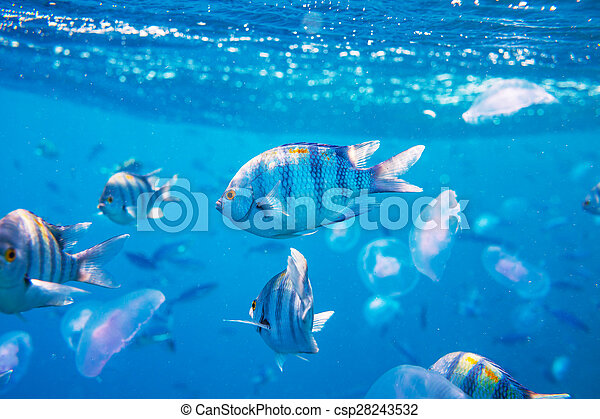 Pescado coral - csp28243532