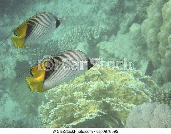 Pescado coral - csp0978595