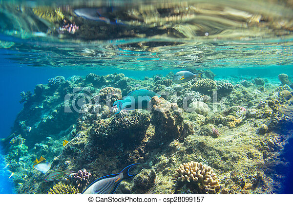 Pescado coral - csp28099157