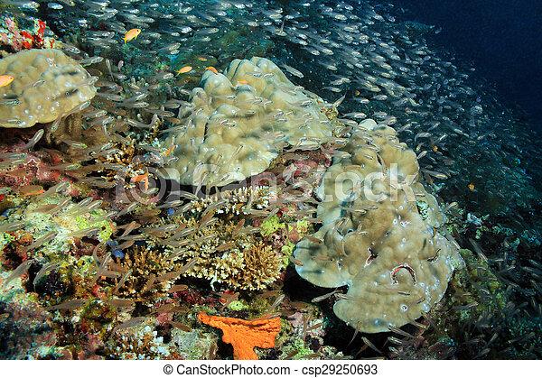 Coral reef y peces de escuela - csp29250693