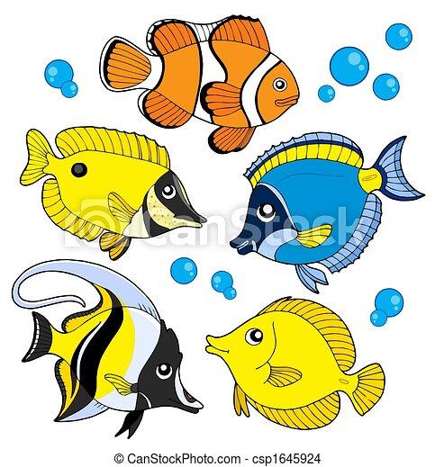 coral, pez, colección - csp1645924