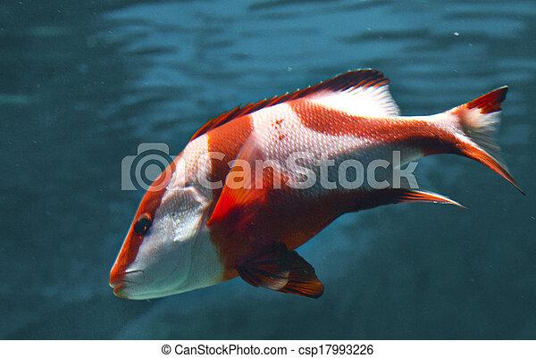 Pescado coral - csp17993226