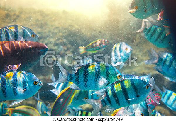 Pescado coral - csp23794749