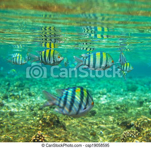 Pescado coral - csp19058595